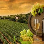 The Benefits of Mississauga Wine Tour Limo Transportation